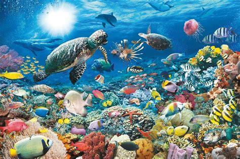imagenes de la vida marina la vida mar 237 tima maholy s blog