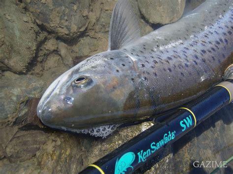 Ss Timiatasabfashionpromobaju Murahcasualbaju Import Sh gazime s trout 3月の本流とスカンジナビアンsh