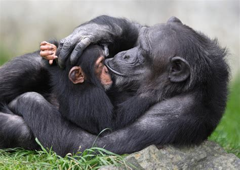imagenes de animales zoologico zoologico walter en gossau
