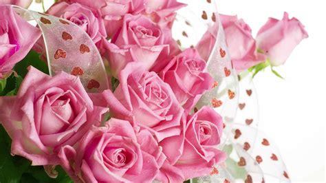 wallpaper hd pink rose pink roses hd wallpapers free download