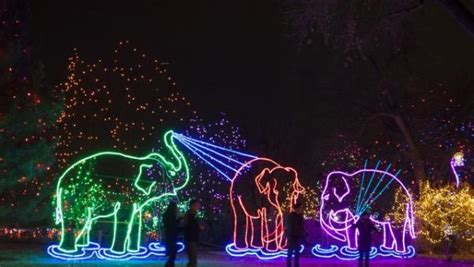 brookfield zoo lights hours light up with a trip to the zoo petslady