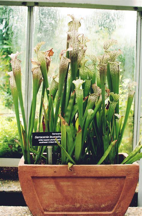 united states botanic garden united states botanic garden our heritage