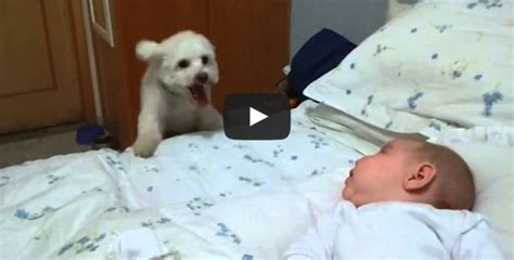 best puppy for baby puppy tries his best to see newborn baby