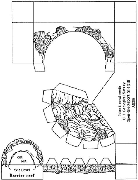 pattern making department coral reef paper models