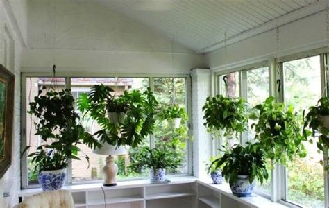 Plants For Sunroom 81 best images about sunroom design and ideas on house design window treatments and