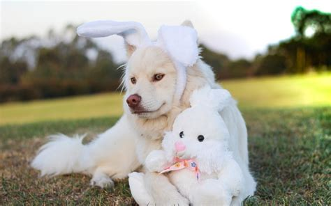 3 week puppy has fleas happy easter what s in your basket to prevent fleas and ticks healing paws