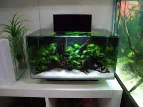 3 fluval edge shop displays aquascapes