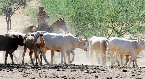 imagenes de paisajes ganaderos grupo m 233 xico reparte 5 2 millones entre ganaderos del r 237 o
