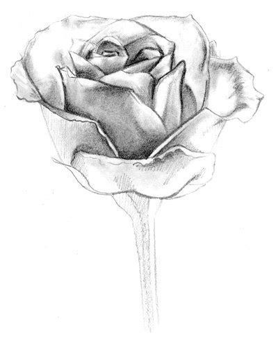 dibujos realistas a lapiz de flores dibujos a l 225 piz de flores dibujos a lapiz