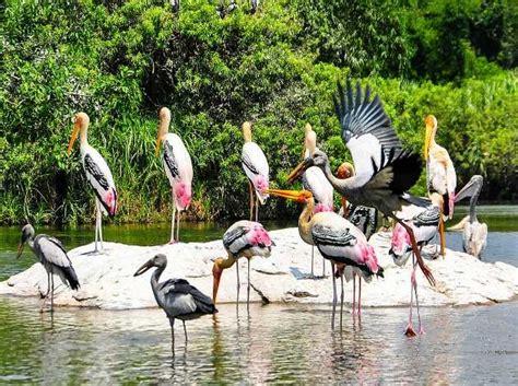 kumarakom bird sanctuary kumarakom national park