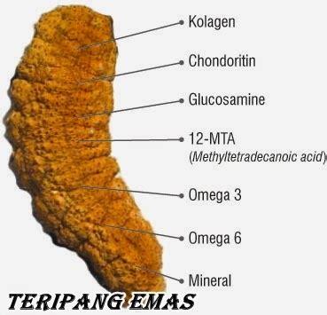 Obat Herbal Gold G obat herbal radang sendi gold g griya herbal alami
