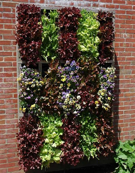 wall vegetable garden 25 best ideas about vertical vegetable gardens on vegetable gardening verticle
