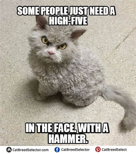 Unhappy Cat Meme - angry cat meme 25 best ideas about angry cat on grumpy cat