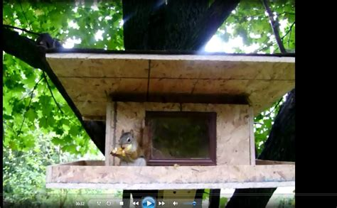 Squirrel Houses Plans Diy Squirrel House To Build A Squirrel House You Need To Gather The Materials And