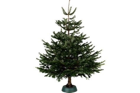 invest in a real tree this christmas 7 top tips from b q