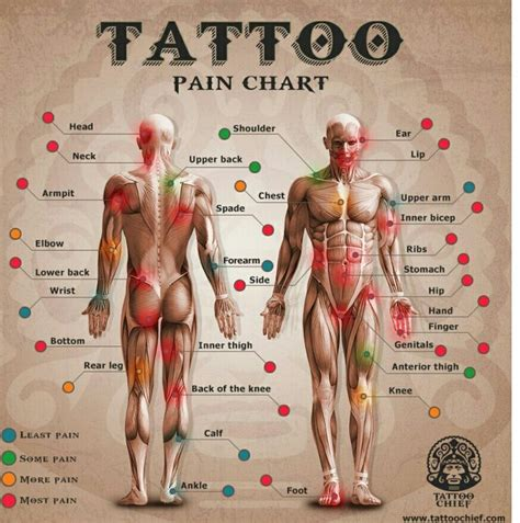 tattoo pain video best 25 tattoo pain chart ideas on pinterest piercing