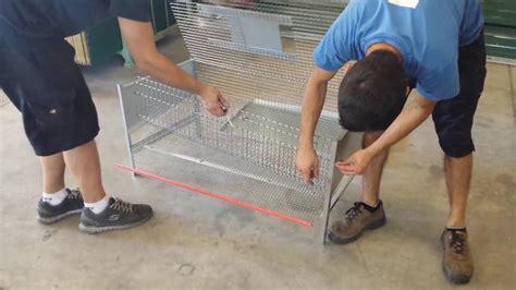 gabbie per quaglie usate gabbia quaglie ovaiole