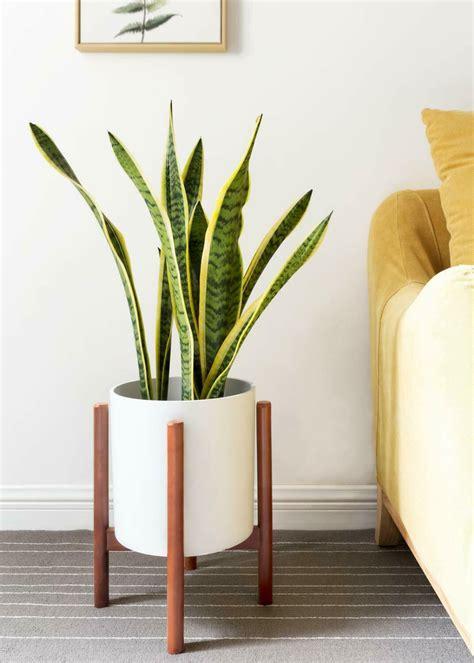 pin  ami  plants  images indoor flower pots