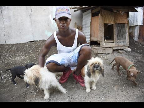 puppies for sale in hton roads breeds dogs to support his family news jamaica
