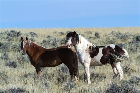 Ranch by Images Gratuites Prairie Prairie Troupeau P 226 Turage