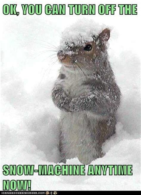 Funny Snow Meme - ot blizzardy warning whiskey tango foxtrot page 7 daz
