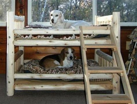 dog bunk bed fabulous dog bed design ideas your pets will enjoy the