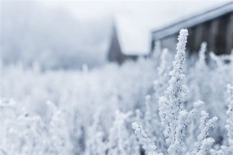 photos of snow field of snow covered plants photo by natasha vasiljeva