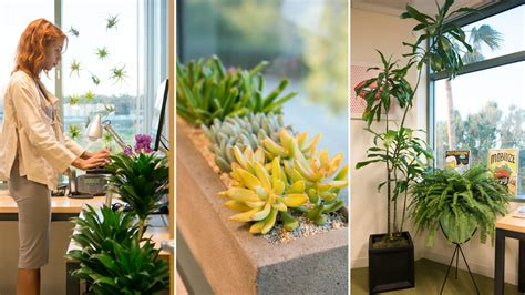 plants for the office gardening 9 to 5 the office gets a plant makeover the