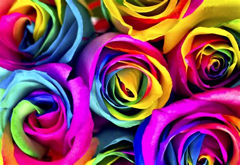 what do different colours mean flowers to dye for how to make rainbow roses jewish journal