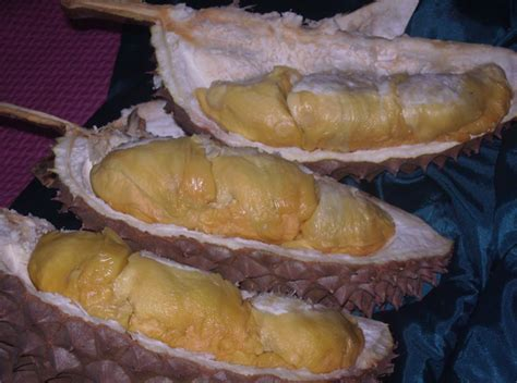 Bibit Durian Bawor Pak Sarno bibit durian bawor produk pt nusantara