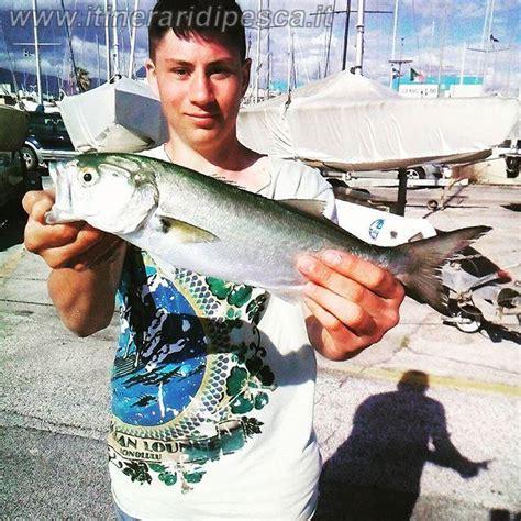 spinning in porto pesca al pesce serra a spinning nel porto di viareggio