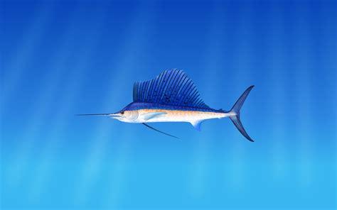 wallpaper fish underwater  animals