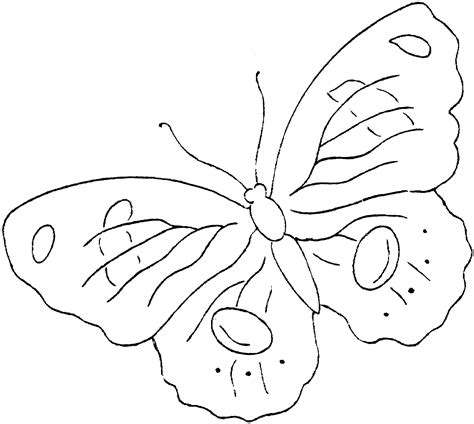 printable images of butterflies free printable butterfly coloring pages for kids