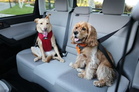 seat belts for dogs how to make your car friendly gofetch ca