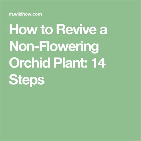 How To Revive A Plant | 78 best images about gardening on pinterest water