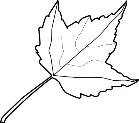 coloring pages oak leaf oak leaf coloring page coloring home