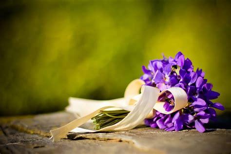 libro sui fiori frasi sui fiori di primavera 187 traduzione libro vi sei de