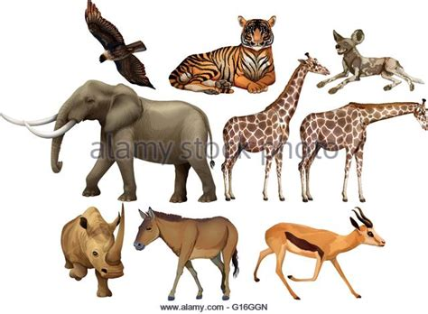 imagenes animales varios hyena cut out stock images pictures alamy