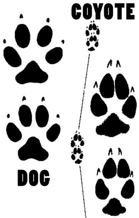 animal footprints tattoo coyote footprints google search auction art ideas
