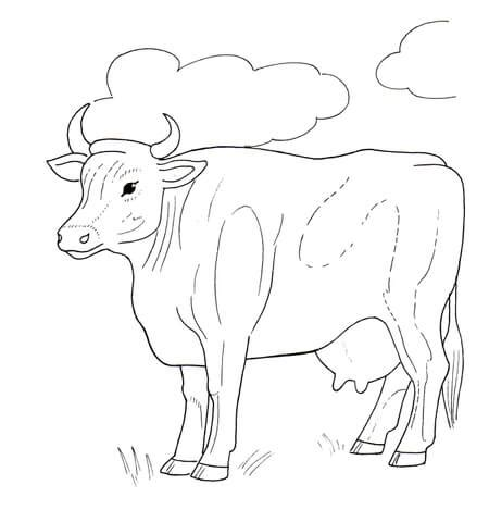 hereford cow coloring page coloring pages of clouds freecoloring4u com