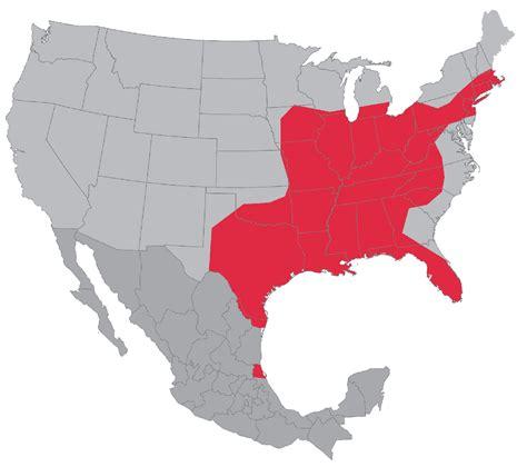 gulf cartel cartels