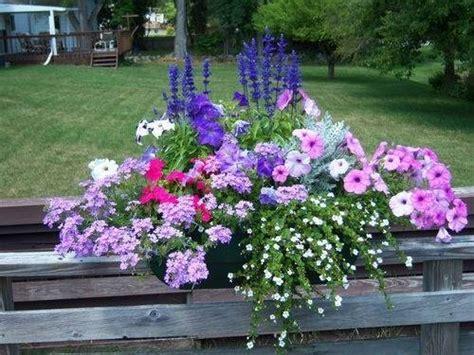 fiori da vaso per esterno fiori per fioriere fioriere