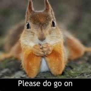 Squirrel Meme - 1000 images about squirrel memes on pinterest holding