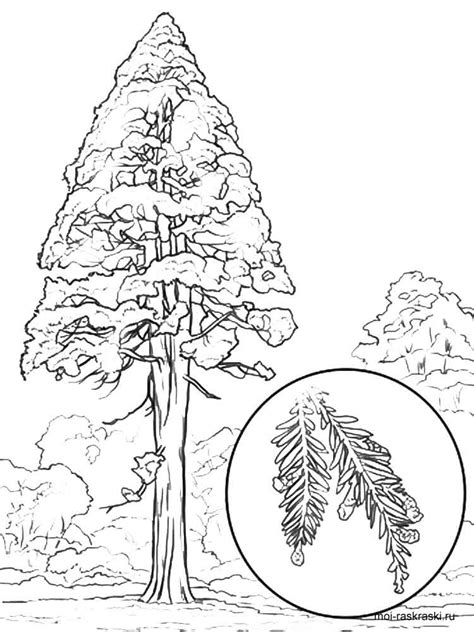 coloring page of redwood tree sequoia tree coloring pages for kids free printable