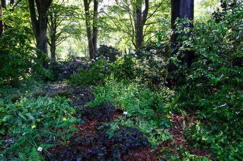Garten Schattenpflanze by Schattenpflanzen Stiftung Bremer Rhododendronpark