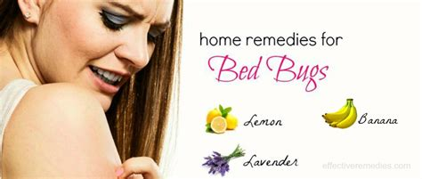 natural home remedies  bed bugs bites removal  body