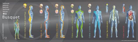 cadenas musculares segun busquet cha 238 nes musculaires l 233 opold busquet 9782353990009