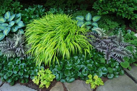 Away To Garden by A Plant I D Order Hakonechloa All Gold A Way To Garden