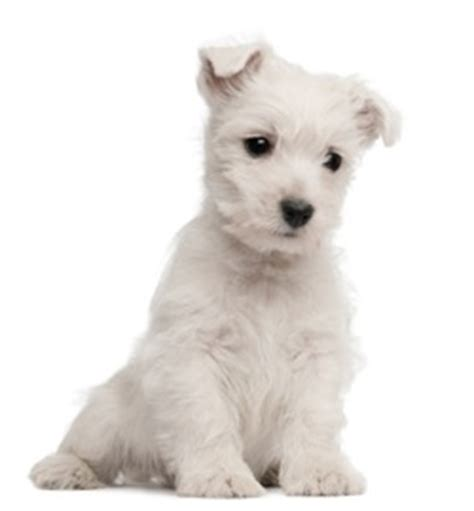 names for white dogs white names