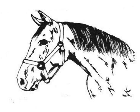 coloring pages of quarter horses free coloring pages of quarter horses